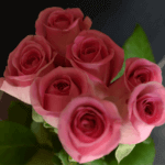 buy roses in baner balewadi from berry's roses and petals - Aqua 150x150 - Buy Roses in Baner Balewadi from Berry's Roses and Petals – 7030983302 7030983307